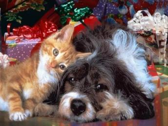 Animali_Natale_b